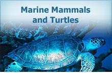 Marine Mammals and Turtles