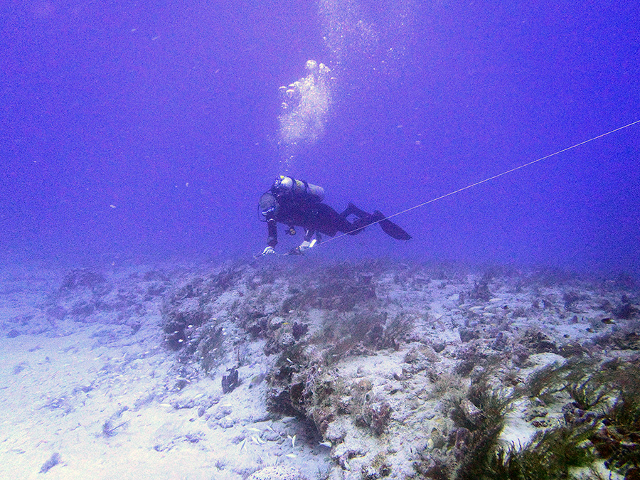 Reef Visual Census sampling during June 2013 off Lake Worth, Inlet